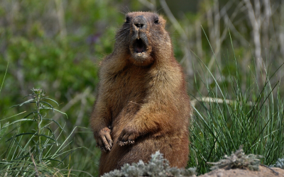 The Groundhog Give