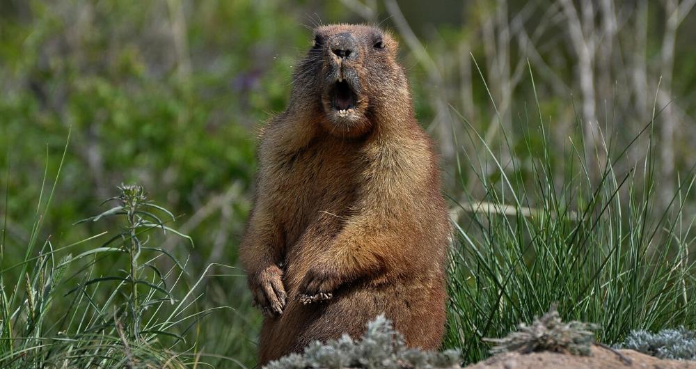 The Groundhog Give